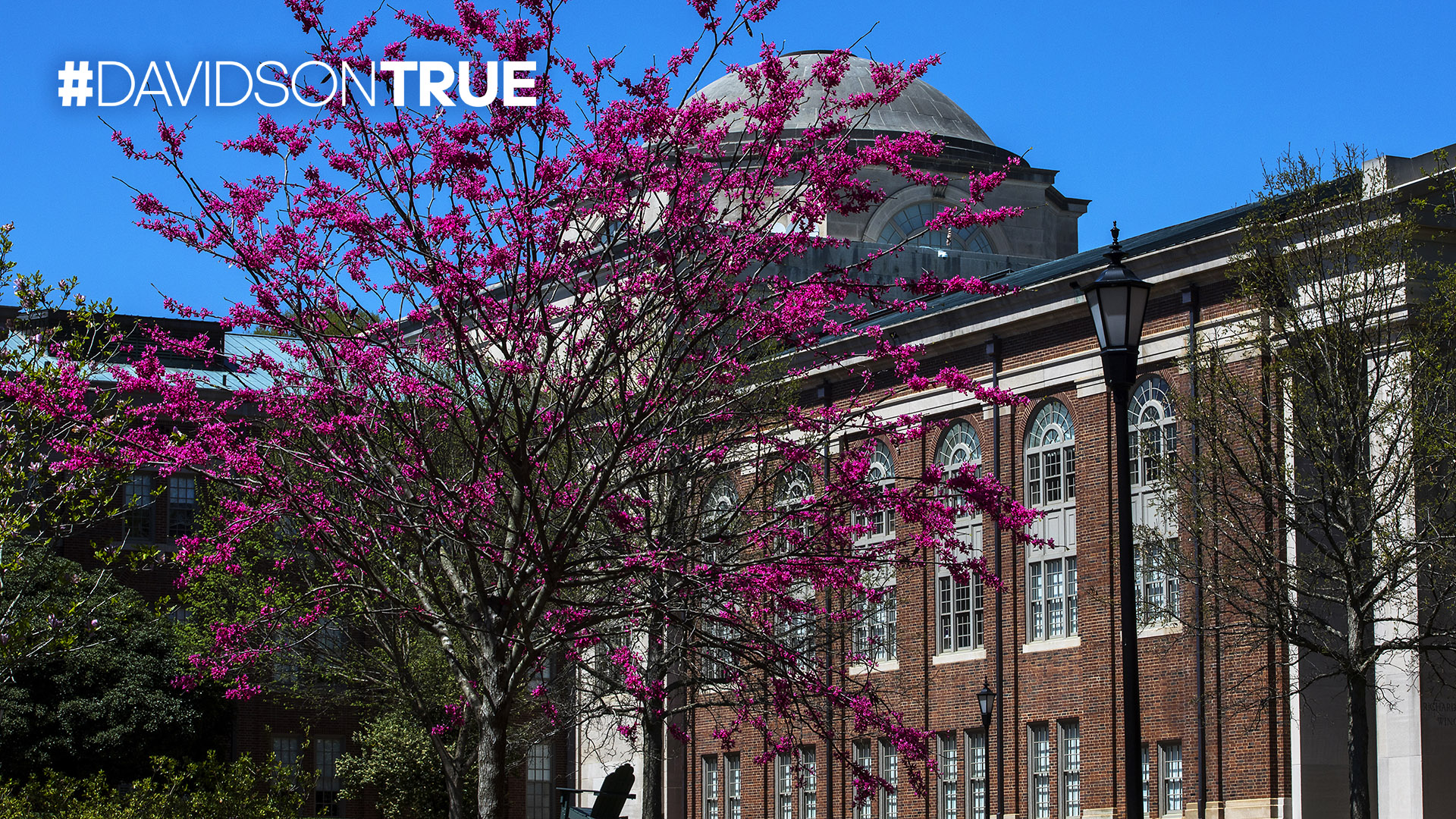 Back of Chambers and Flowering Tree with #DAVIDSONTRUE